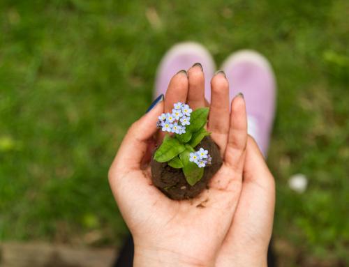 วิธีง่ายๆ ที่จะตอบแทนธรรมชาติ ด้วยการสร้างสิ่งแวดล้อมที่ดีจากบ้านคุณ