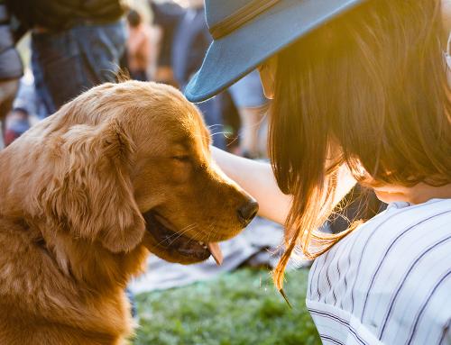 จัดสวนเอาใจเจ้านาย! สวนแบบไหนที่จะสร้างความสุขให้สัตว์เลี้ยง