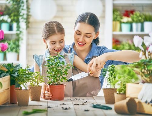 """กังวลเรื่องแย่งหายใจจนไม่ยอมปลูกต้นไม้ในบ้าน """"CAM Plant"""" คือคำตอบ!"""