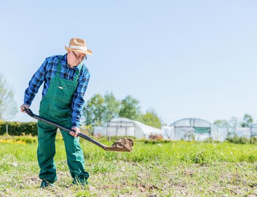วิธีดูแลหญ้าในสวนให้แข็งแกร่งอยู่คู่พื้นที่พักผ่อนของคุณไปนานๆ