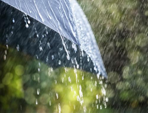 สัตว์มีพิษที่มากับหน้าฝน ป้องกันอย่างไรดี