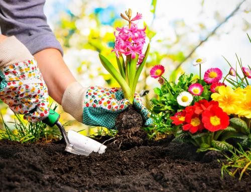 5 ไม้ดอกไม้ประดับที่ควรปลูกในฤดูฝน เพื่อช่วยเพิ่มความสดใส